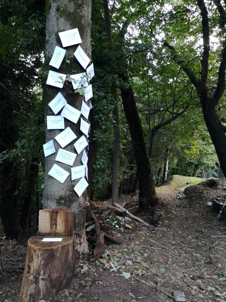 POESTATE2020, L'albero della poesia: dalla steppa della Mongolia al bosco del Malcantone. Ottobre 2020