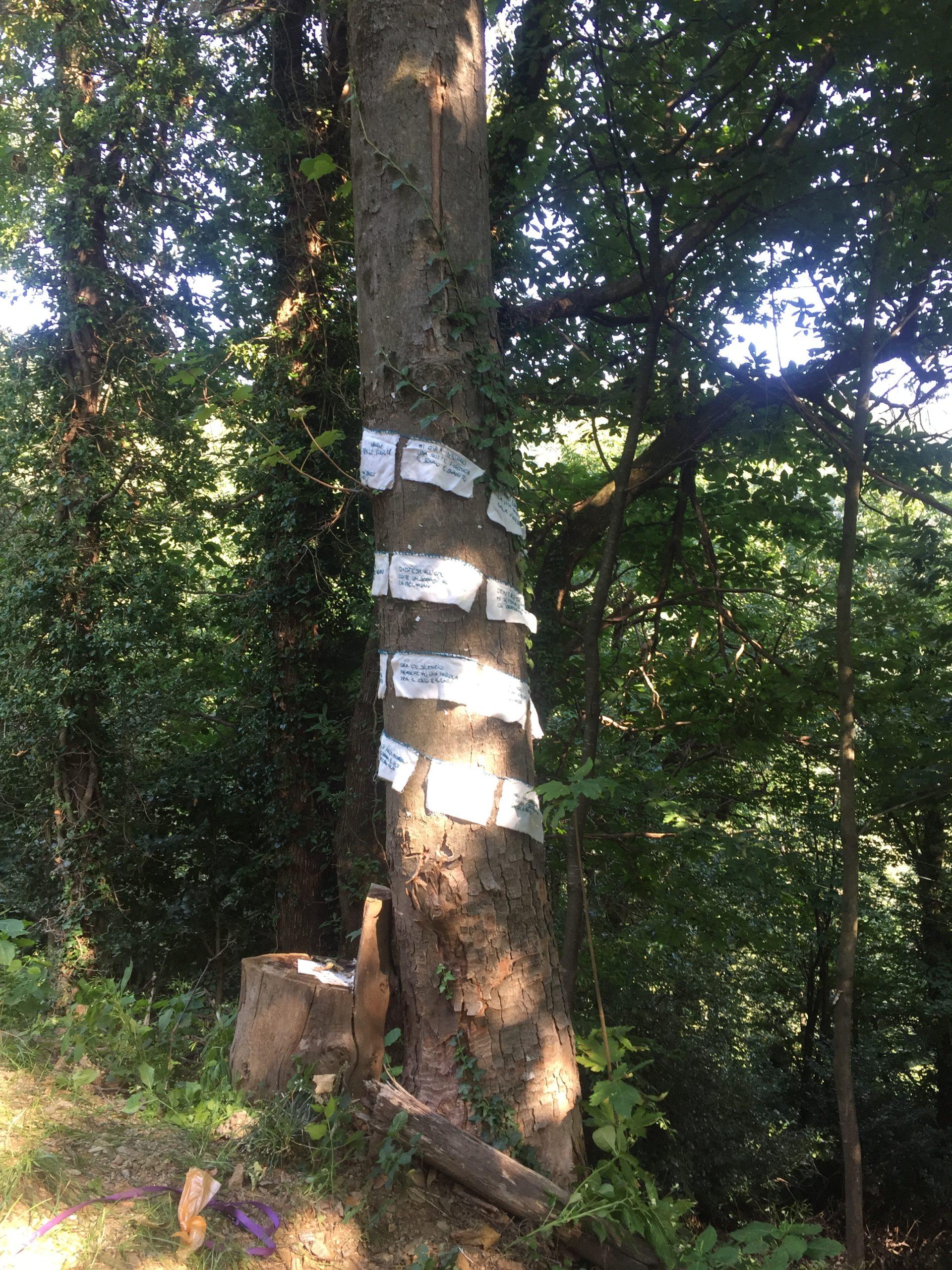 Tina Biasci, Haiku tra le foglie, agosto 2021